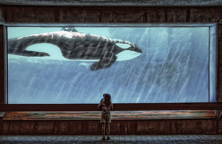 Whale Photograph - The Encounter by Heather  Rivet