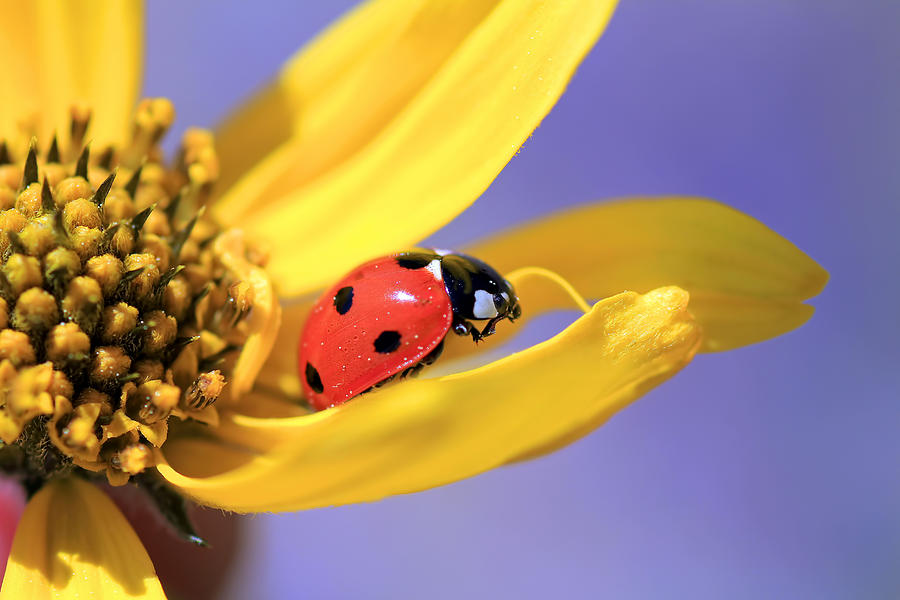Ladybugs Photograph - The End by Donna Kennedy
