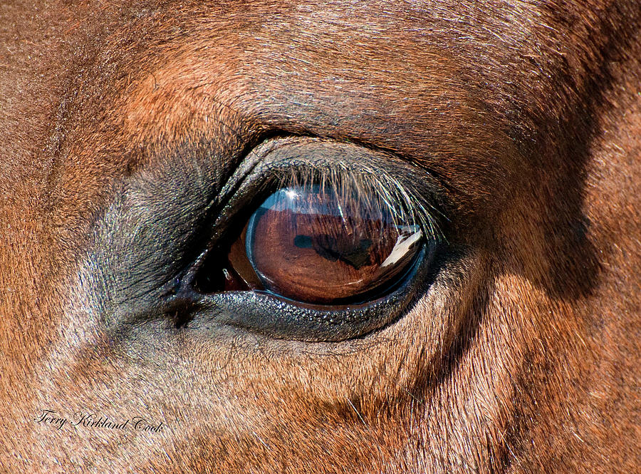 Equine Photograph - The Equine Eye by Terry Kirkland Cook