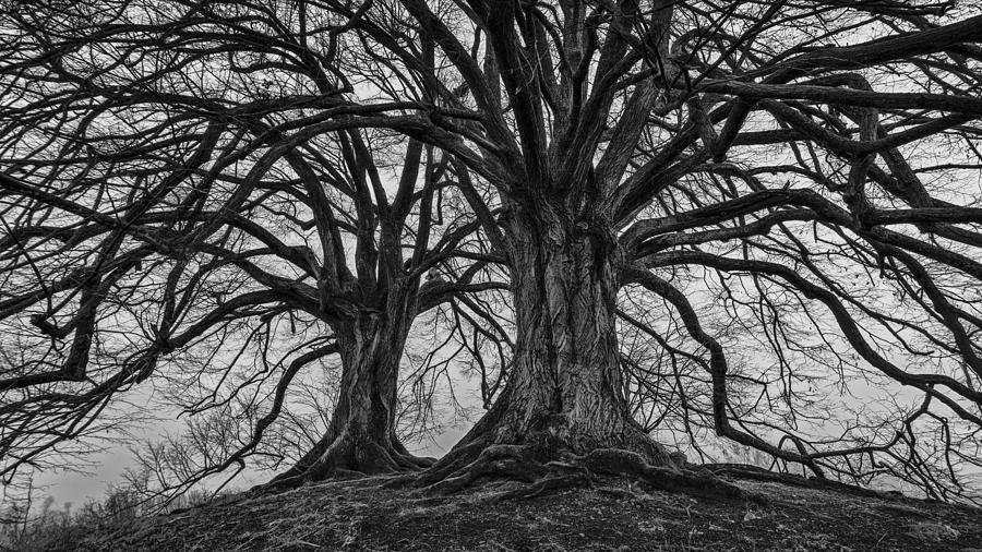Black And White Photography Photograph - The Essence Of Nature by KaFra Art