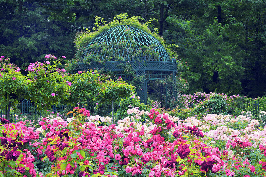 Roses Photograph - The Extravagant Garden by Jessica Jenney