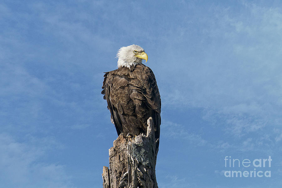 The Eye Of Freedom by Craig Leaper