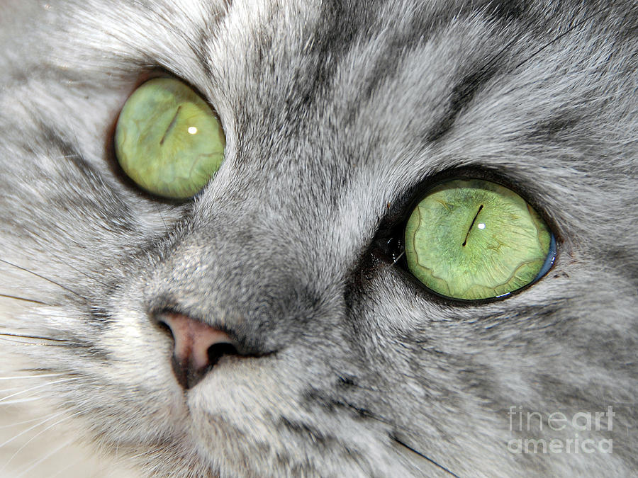 Cat's Eyes Photograph - The Eyes Have It by Graham Taylor