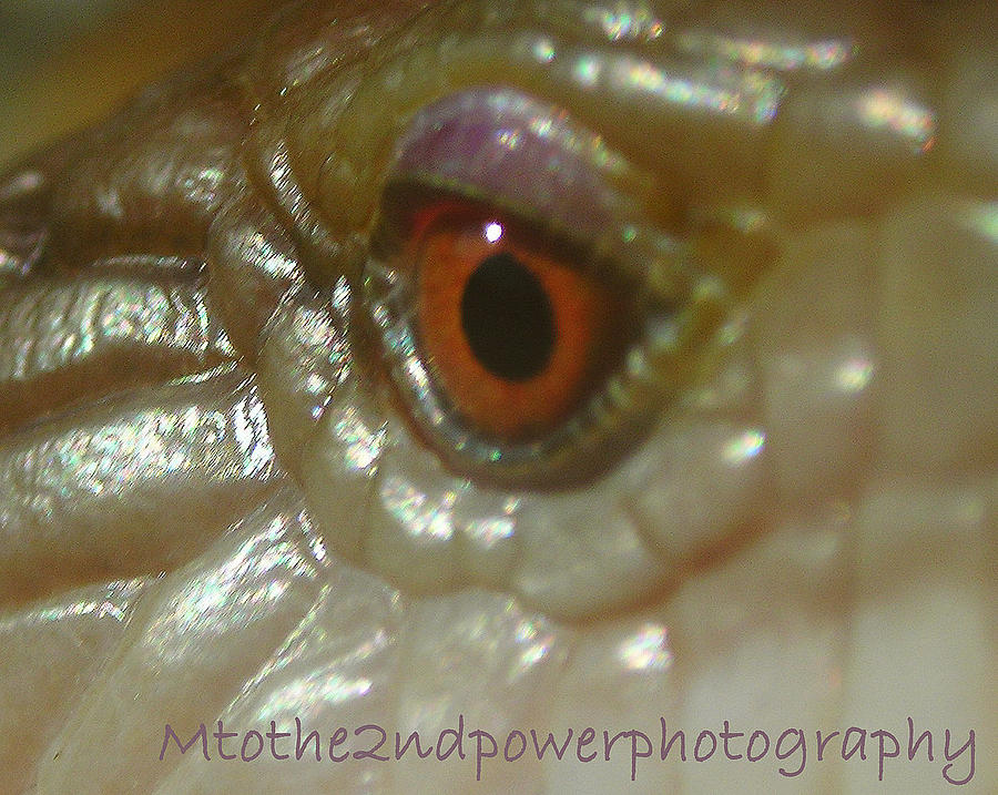 Eye Photograph - The Eyes Have It by Megen McAuliffe