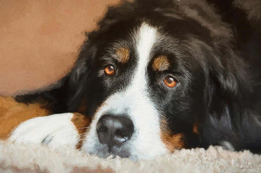 The Eyes Of A Bernese Mountain Dog Painting