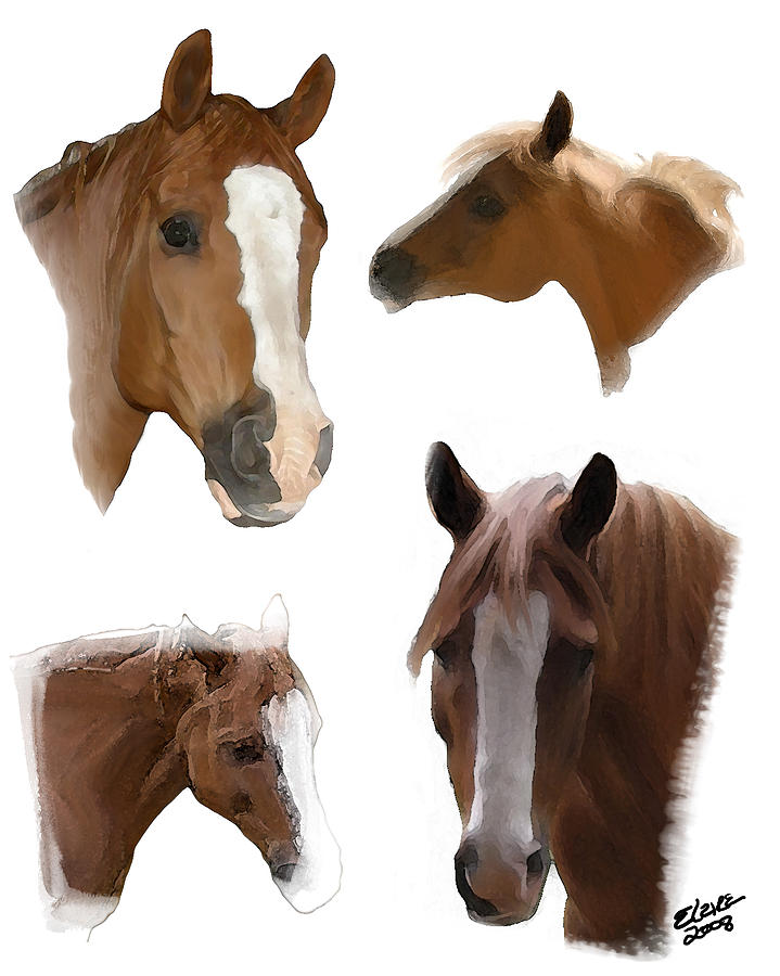 Arabian Horse Painting - The Faces of T by Elzire S