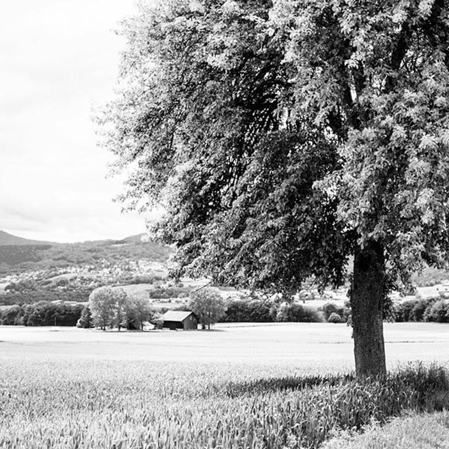 Farmhouse Photograph - The Farm by Aleck Cartwright