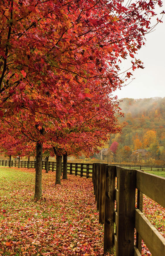 The Farm In Fall Photograph by Sallie Woodring