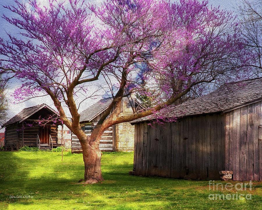 The Farm by Lena Wilhite