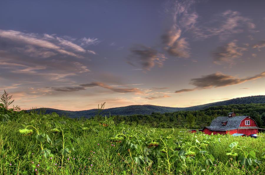 Farm Photograph - The Farm by Sander Hunter