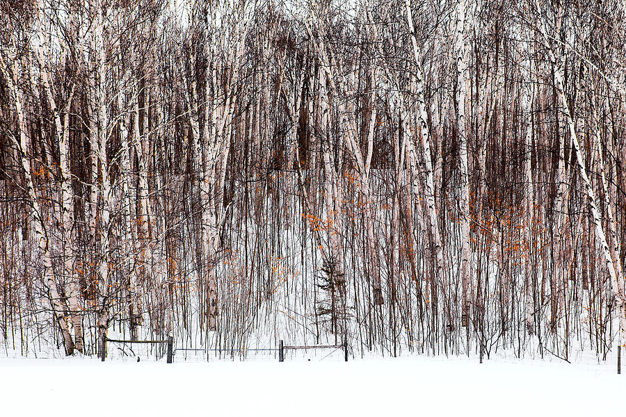 Trees Photograph - The Fence by Linda McRae