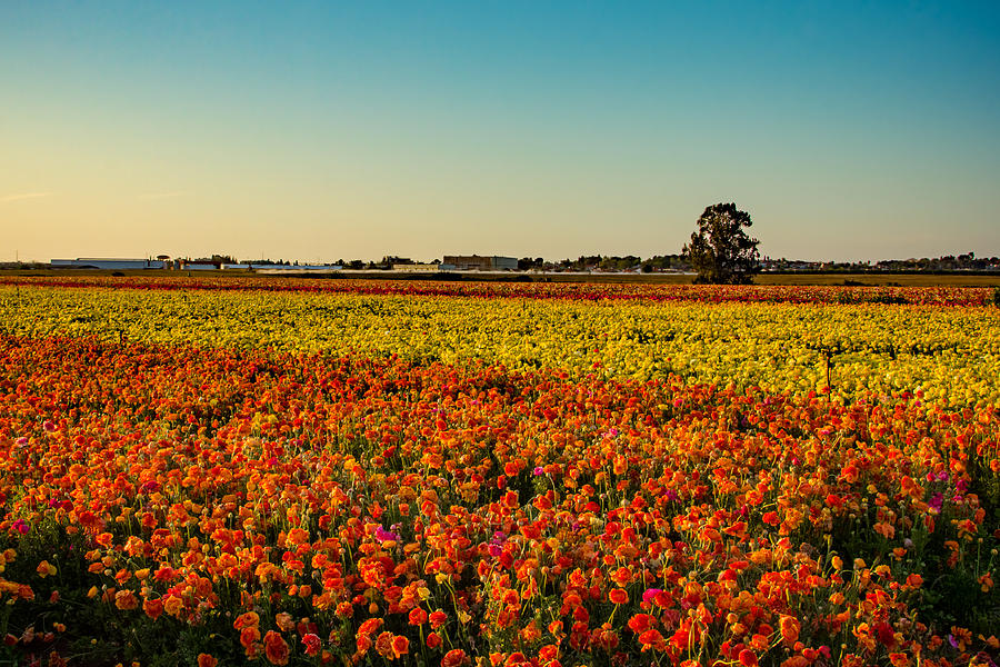 Flowers Photograph - The Field Of Flowers by Mark Perelmuter