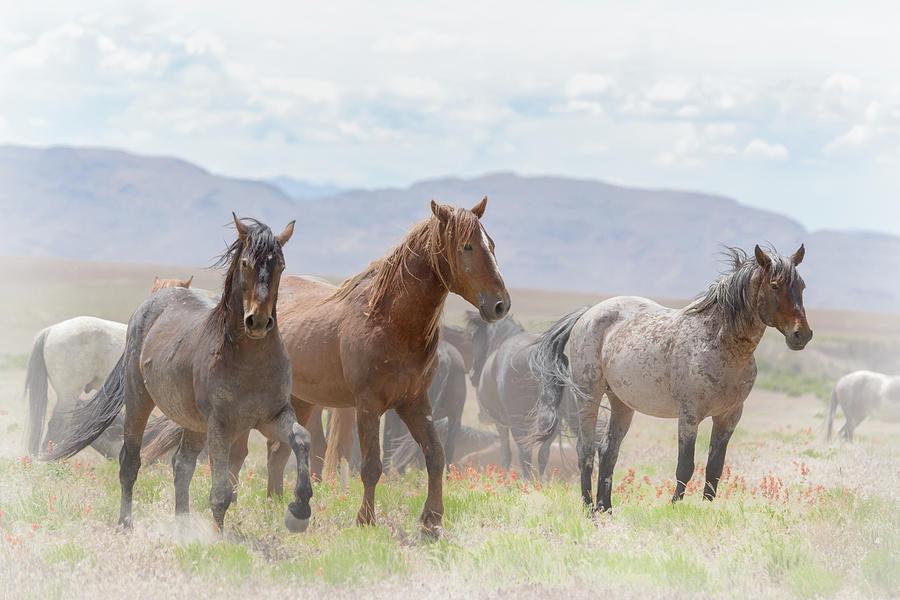 Wild Horses Photograph - The Fight Club by Joe Hudspeth
