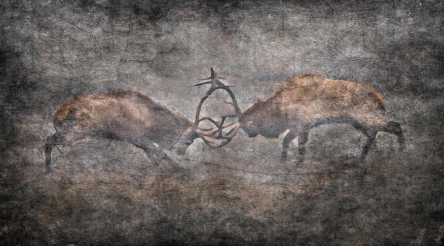 Elk Fighting Photograph - The Fight by Garett Gabriel