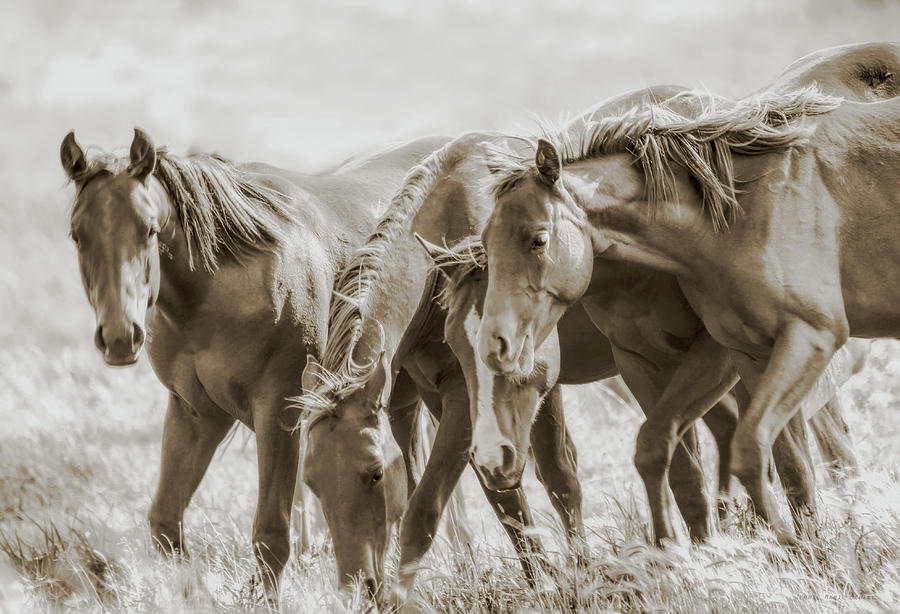 Horse Photograph - The Fillies by Jennie Marie Schell