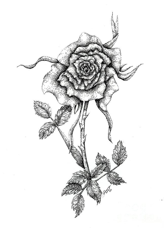 Flower Drawing - The First Rose by Dianna West