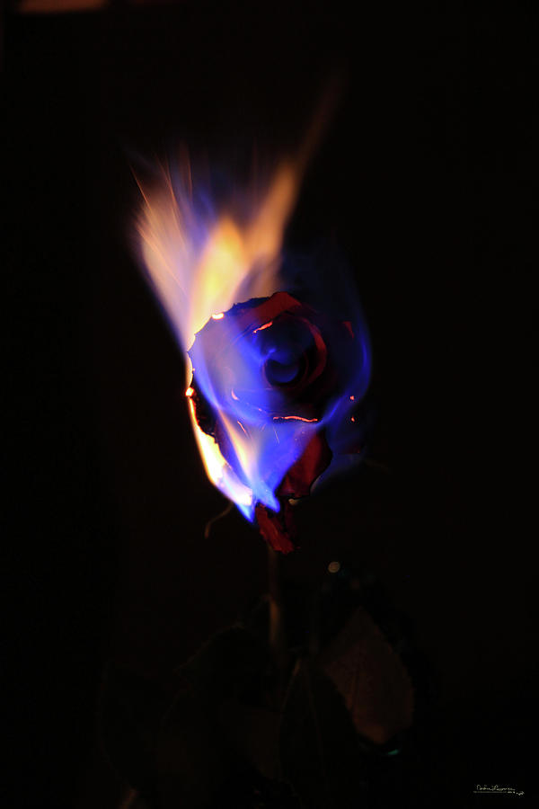 The Flaming Flower 1 by Andrea Lawrence