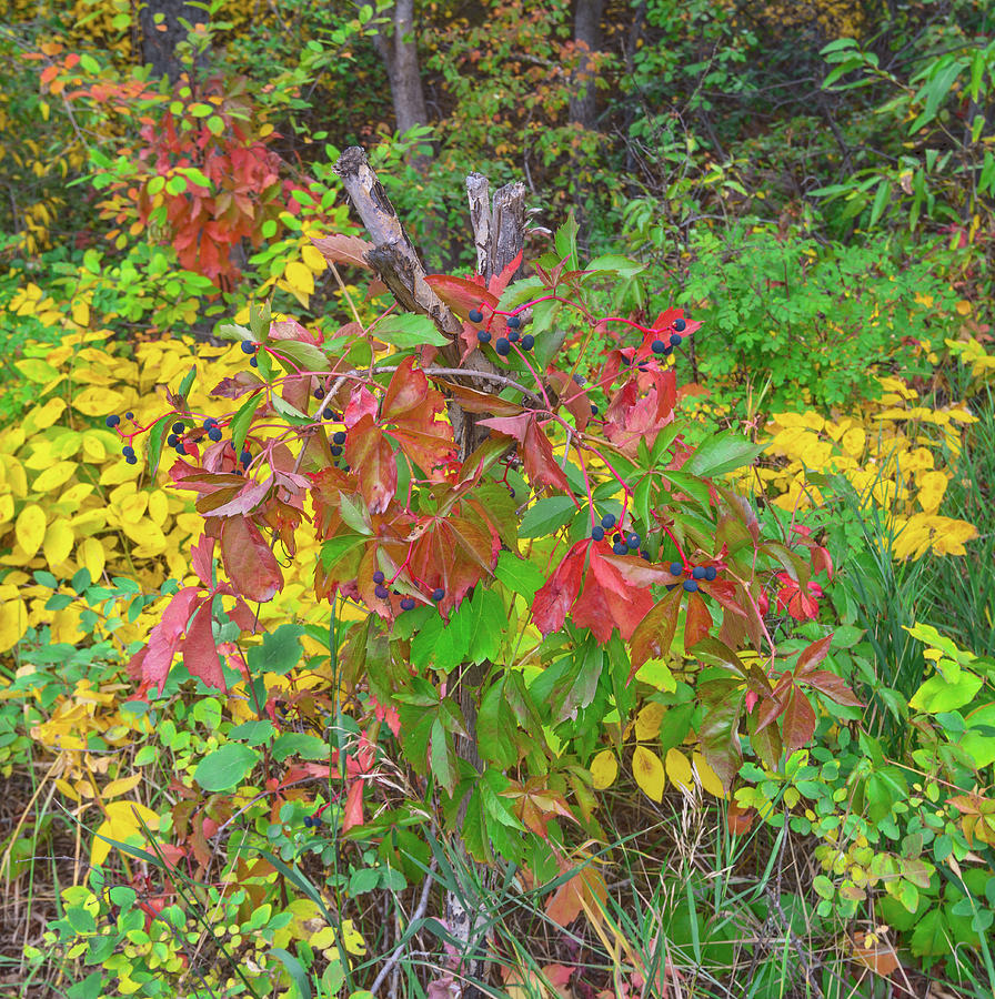 Fall Colors Photograph - The Foliage That Seems To Be Almost Sentient  by Bijan Pirnia