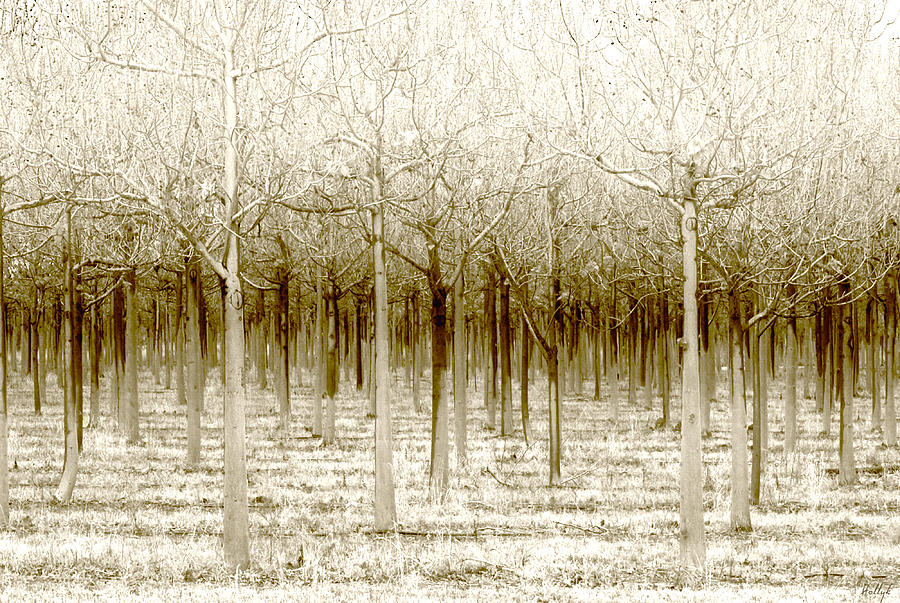 Landscape Photograph - The Forest For The Trees by Holly Kempe