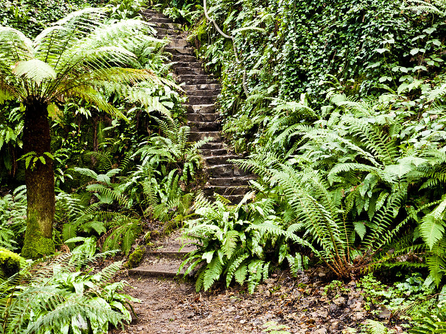 Blarney Photograph - The Forest Stairwell by Rae Tucker
