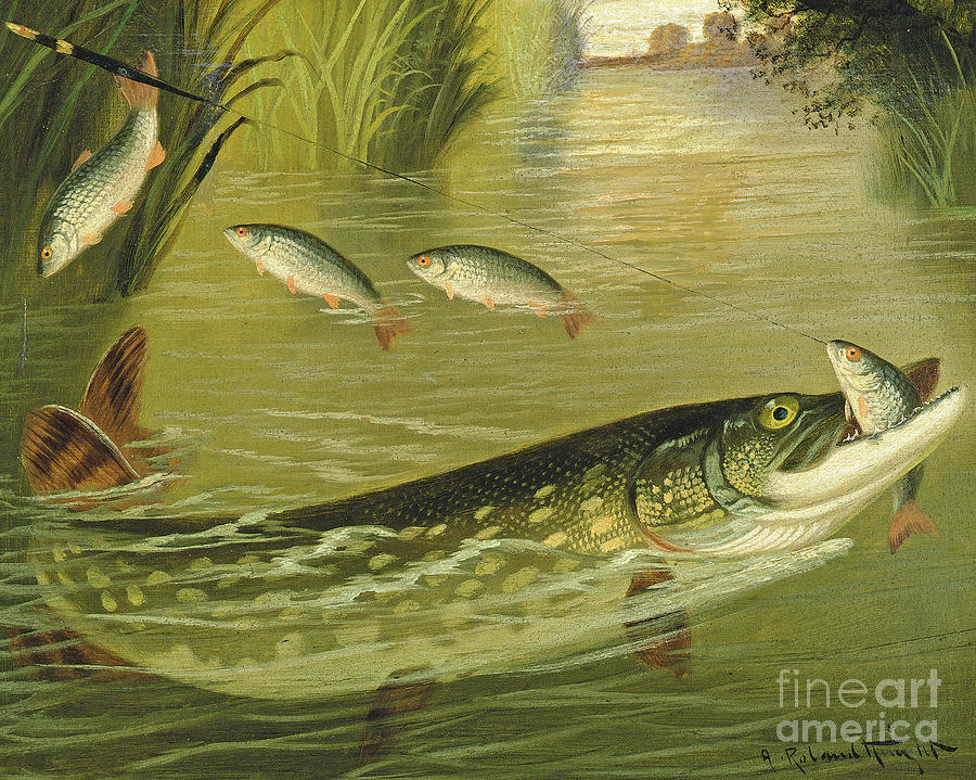 Fish Painting - The Four That Got Away by A Roland Knight