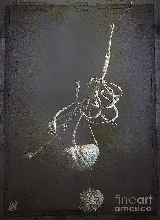 Still Life Photograph - The Fruits Of Our Labour by Jacques Pierre Niemandt