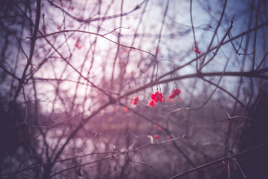 Landscape Format Photograph - The Fruits Of Spring by Radek Spanninger
