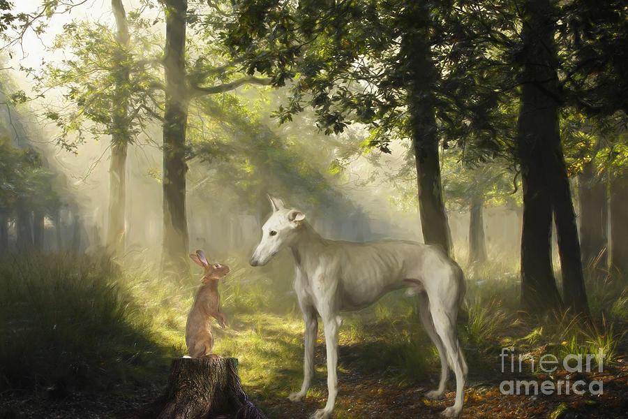 Dog and the Rabbit by Travis Patenaude