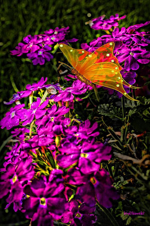 The Garden Photograph