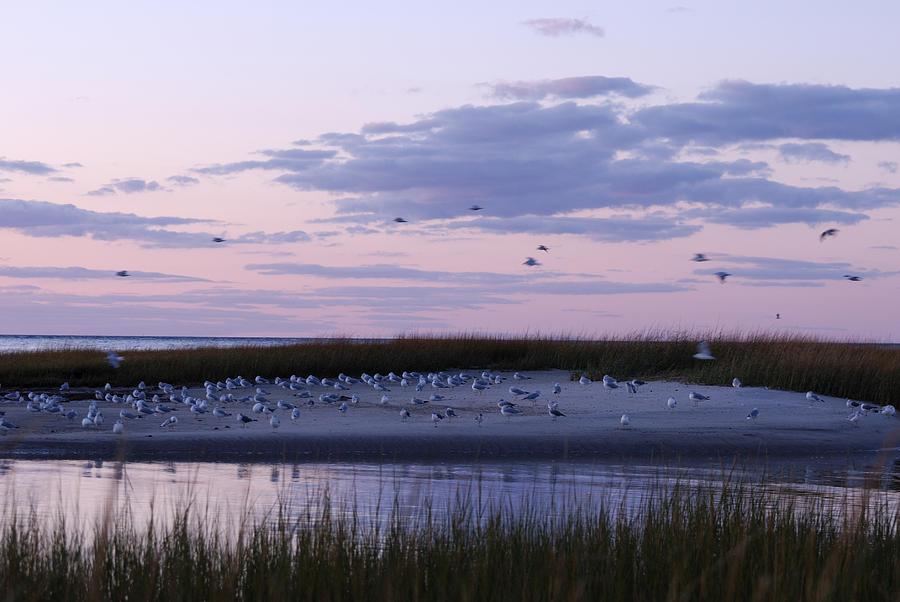 Sunrise Photograph - The Gathering by Mimi Katz