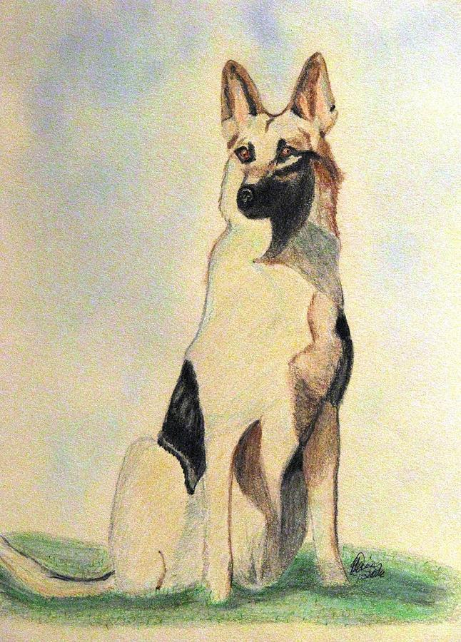 The German Shepherd Friend For Life Drawing By Angela Davies - German-shepherd-drawings