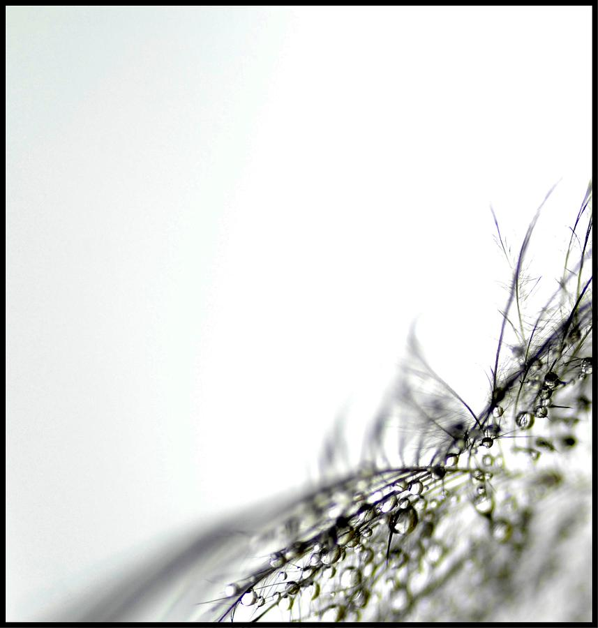 Macro Photograph - The Gift by Annie Lemay