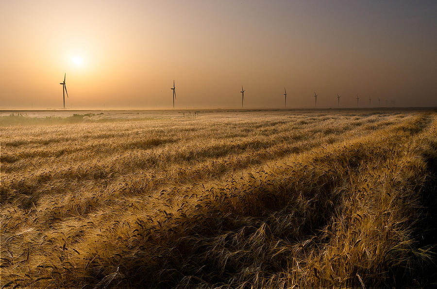 Wheat Photograph - The Gifts Of Nature by Electriciron
