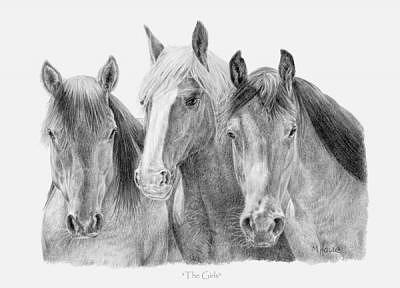 Horses Drawing - The Girls by Marc Houde