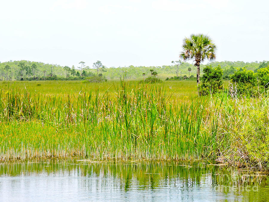 Everglades Photograph - The Glades by Marilee Noland