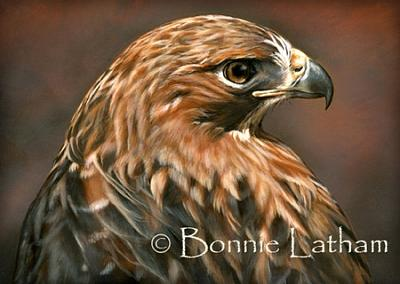 Miniature Painting - The Glance - Red Tailed Hawk by Bonnie Latham