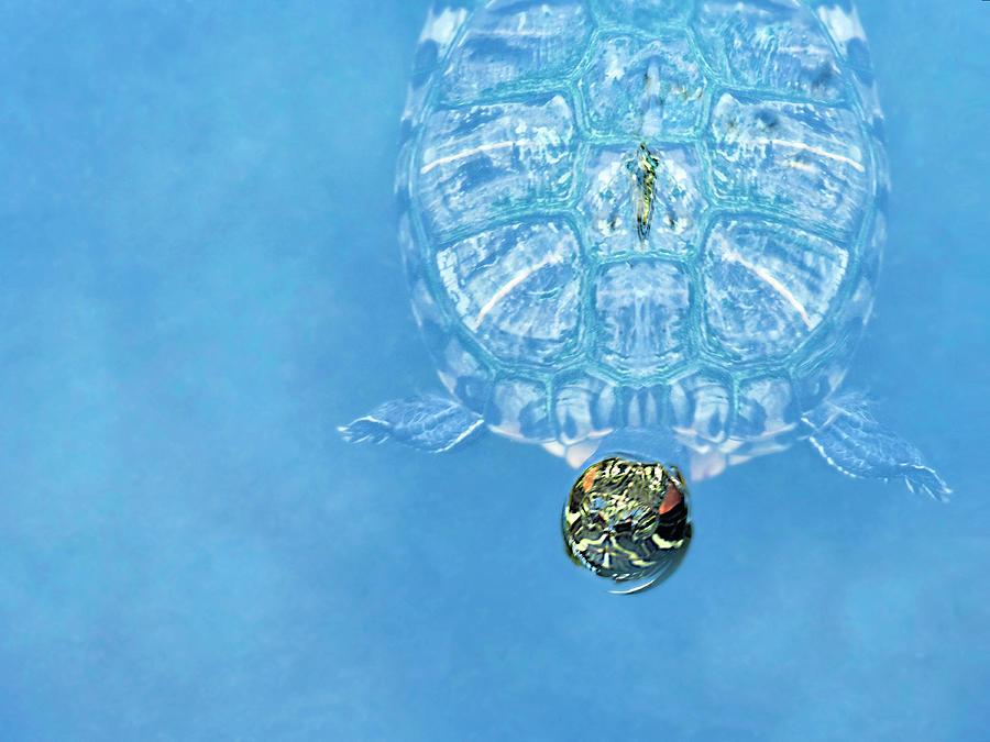 The Glass Turtle by Dianna Lynn Walker