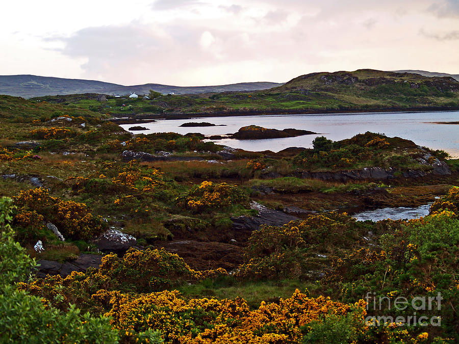 Landscape Photograph - The Gorse It Was Abloomin by Patricia Griffin Brett