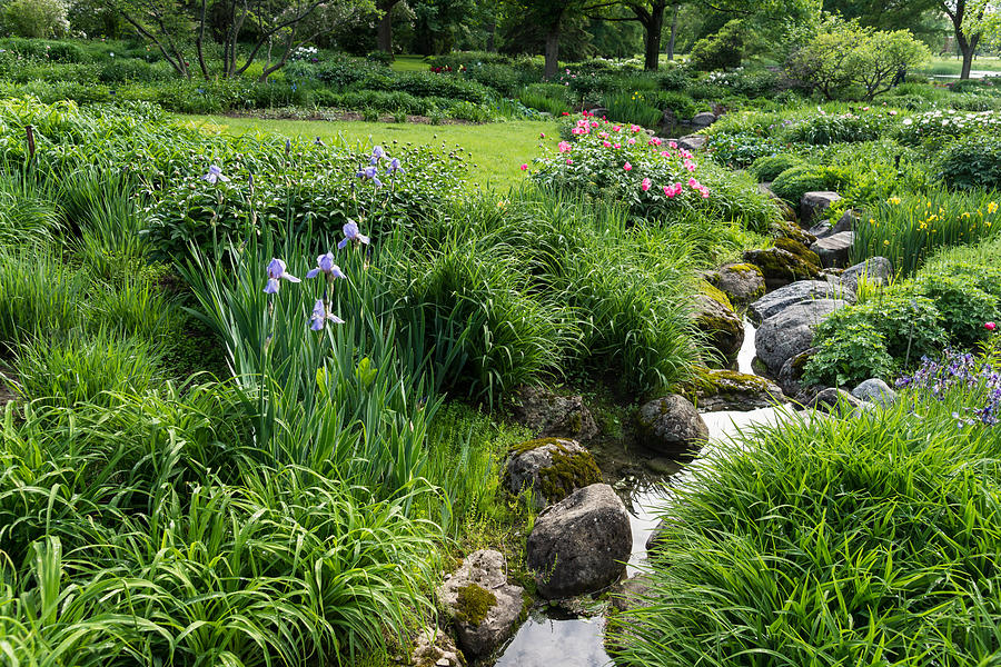 The Green Magic Of Summer - Miniature Brook In The Garden Photograph ...