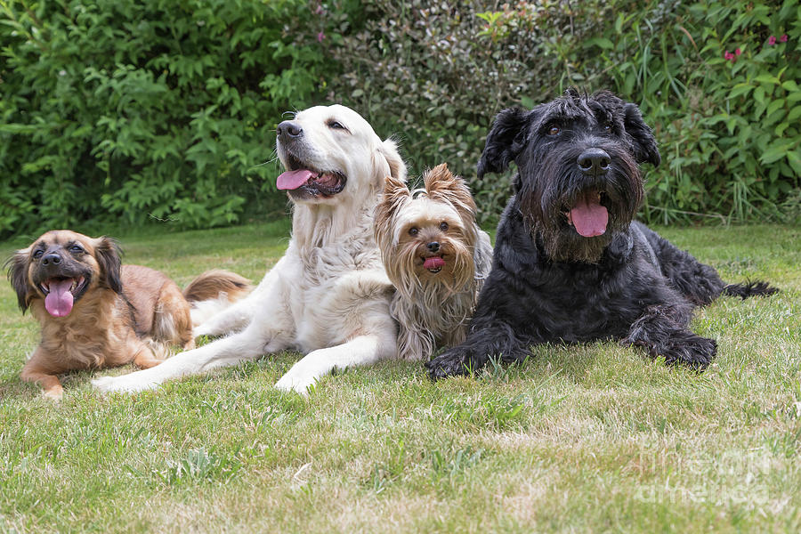Pet Photograph - The Group Of Dogs by Jaroslav Frank