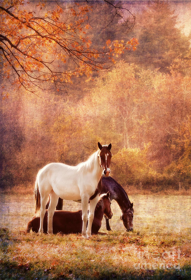 Horse Photograph - The Guardians by Darren Fisher