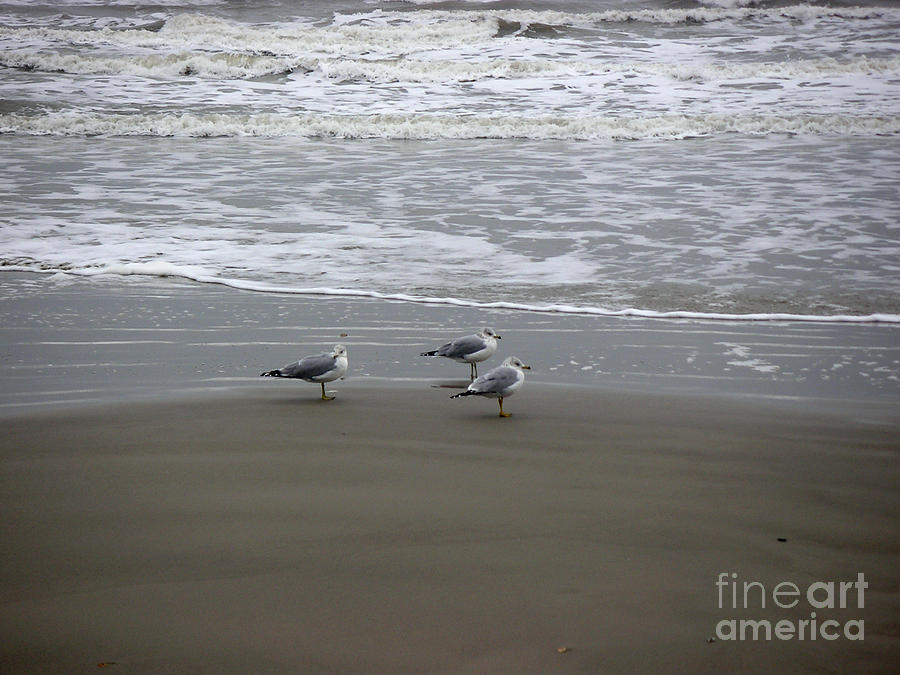 Nature Photograph - The Gulf In Shades Of Gray - Formation by Lucyna A M Green