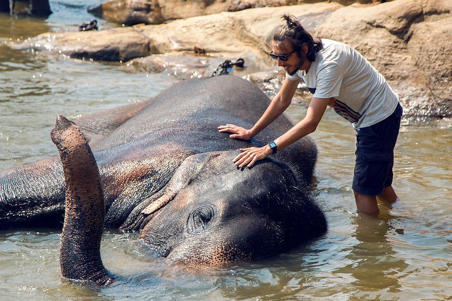 The Guy Bathes An Elephant Photograph