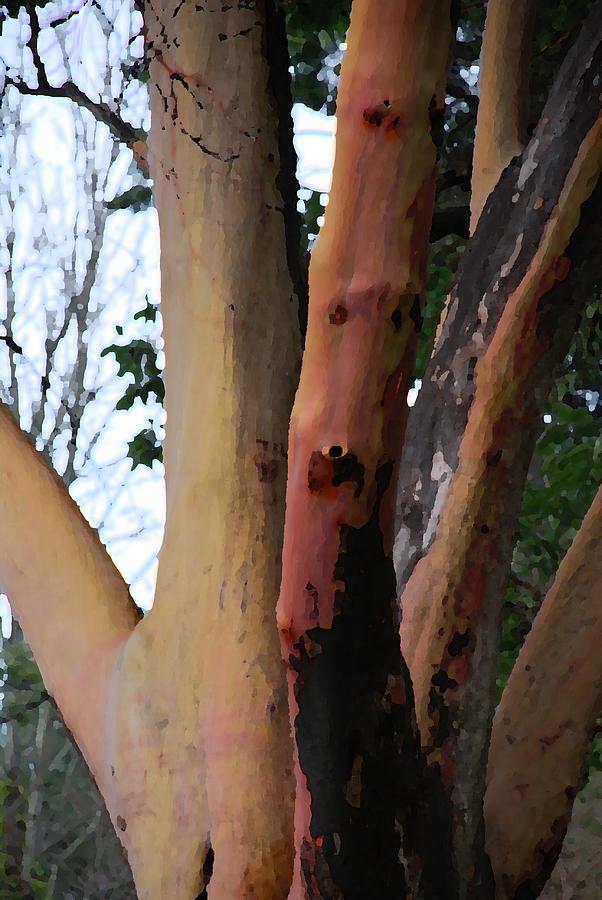 Trees Photograph - The Hand by Carol  Eliassen