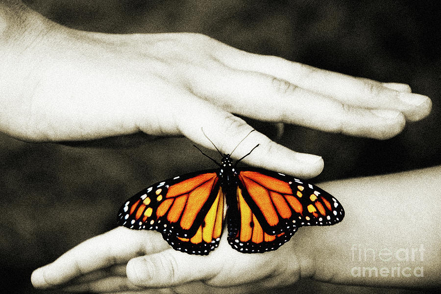Monarch Butterfly Photograph - The Hands And The Butterfly by Andee Design