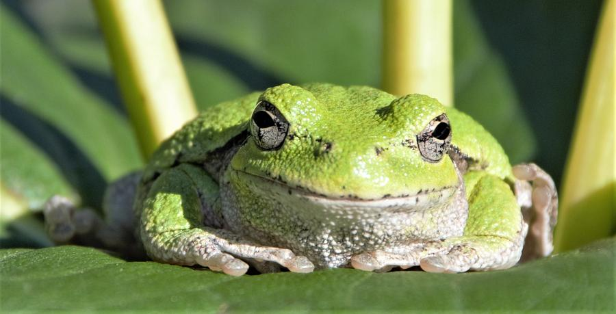 The Happiest Tree Frog by Michael Hall