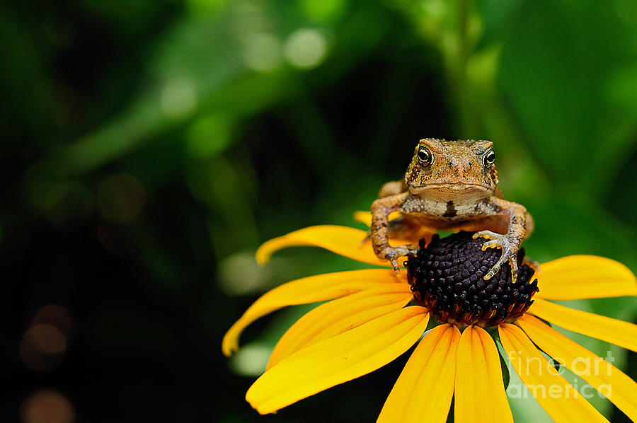 Toad Photograph - The Harbinger by Lois Bryan