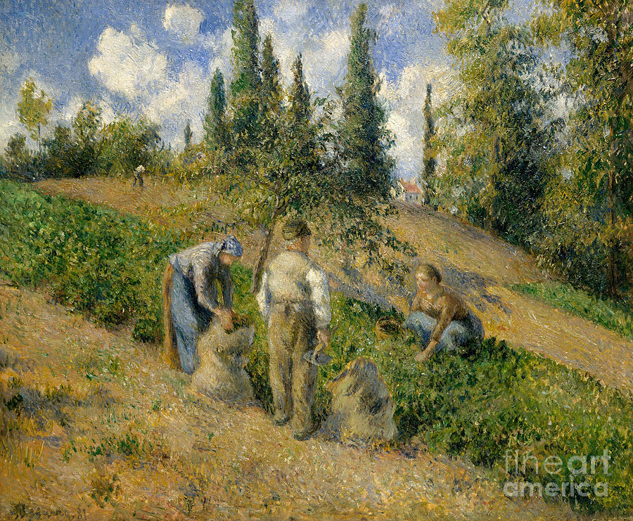 The Harvest Painting - The Harvest, Pontoise, 1881  by Camille Pissarro