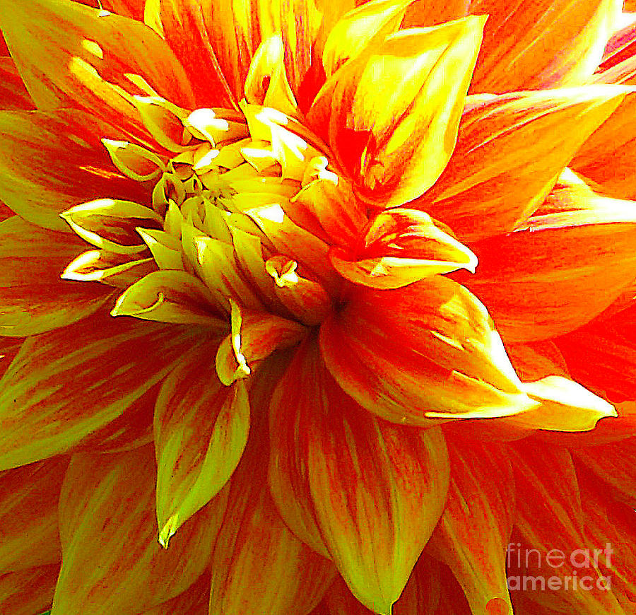 The Heart of a Dahlia #2 by Joyce Creswell