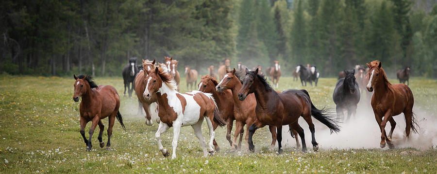 The Herd - Three Bars Ranch by Ryan Courson